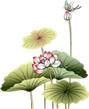 presentation-fleurs